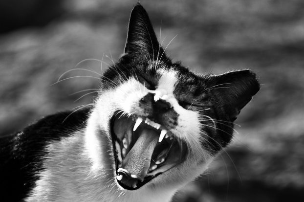 angry-animal-black-and-white-693785.jpg